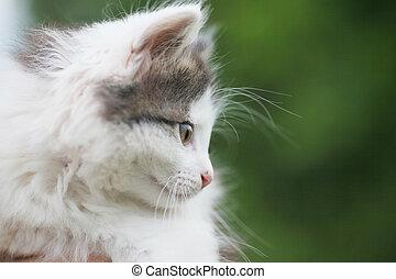 lieb, katzenkinder, Seite