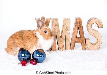 lieb, weihnachten, grüße
