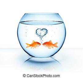 liebe, goldfisch, -, romantische , begriff