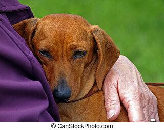 liebte, dachshund, viel