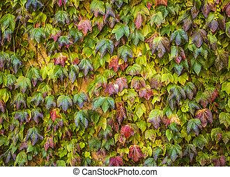 Arbre vert plante vigne collant lierre anglais images - Comment se debarrasser du lierre ...