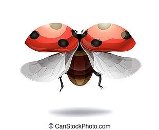 lieveheersbeest, vliegen, illustratie, achtergrond., vector, witte