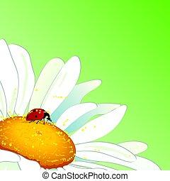 lieveheersbeestje, madeliefje