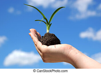 Life - A hand holding a new plant against the blue sky