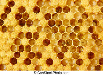 The images show larvae of bees and their future cocoons. Part of hundred empty.