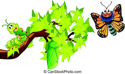Life cycle of monarch butterfly