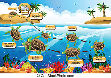 Life cycle of the sea turtle - A vector illustration of life...