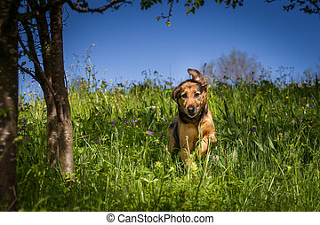 Life is so beautiful, at least it looks as if it is the mixed breed dog to happily romp through a field of flowers so would.