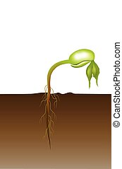 Life of a bean plant. Education info graphic. - Seed...