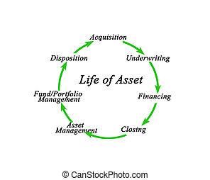 Life of Asset