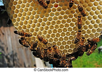 Life of bees. Bees are builders. - If bees do not have the ...