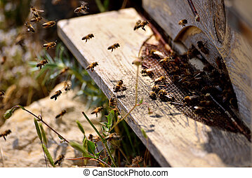Life of bees. Reproduction of bees