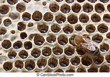 Life of insects. Honey closing.