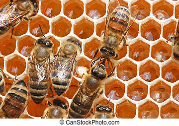 Life of insects. Transformation of nectar in medical - Bees...