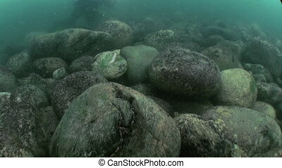 Life of insects underwater closeup in Lake Baikal Siberia Russia.