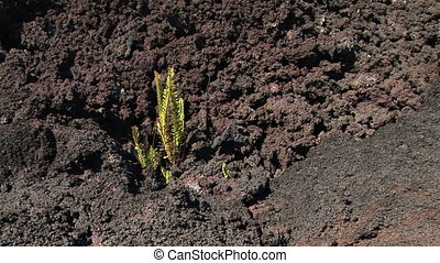 Life out of nothing - Small plant growing from a barren...