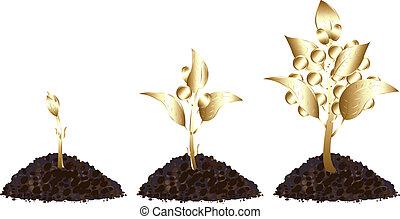 Life process of Golden Tree
