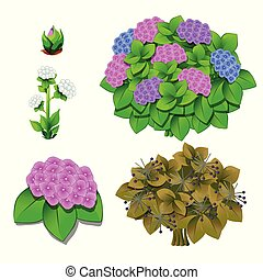 Life stages of flowers isolated on white background. Vector cartoon close-up illustration.