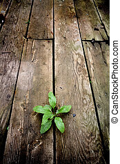 life - young green plant emerging through the cracks of an...