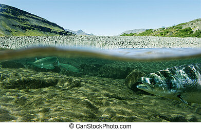 life underwater - Unique shot of a fishing river underwater...