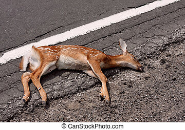 A photo of a dead white tailed deer fawn on the side of the road.