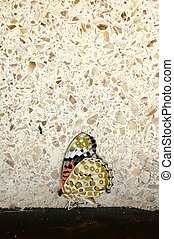 lifeless butterfly