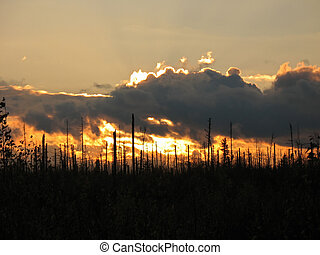 Sunset in lifeless forest. Problem of ecology.