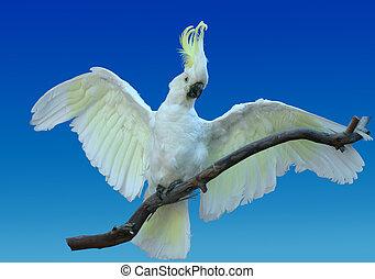LIfelike cockatoo - Life-like cockatoo - this is a taxidermy