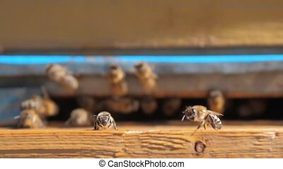 lifestyle slow motion video apiary. a swarm of bees flies...