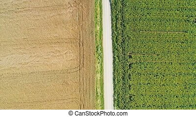 Lifting drone from dirt road in summer rural scene, between ...