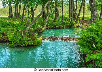 ligado, floresta, rio, fonte