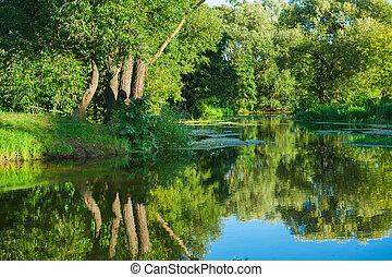 ligado, rio, em, floresta