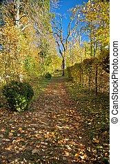 liget, út, alatt, ősz