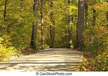 liget, fasor, alatt, ősz fűszerezés