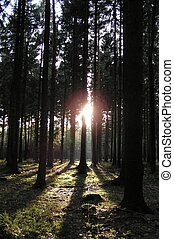 light at dark forest - This photo was made by walk trough a...