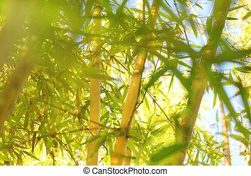 Light bamboo background