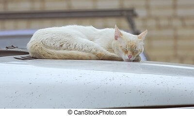 cat sleeps on the roof of the car slow motion video - light...