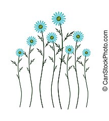 Light Blue Daisy Blossoms on White Background