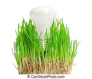 light bulb on grass symbolizing green energy