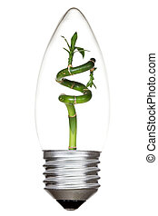Light bulb with green bamboo inside