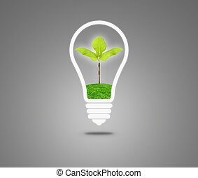 Light Bulb with sprout inside