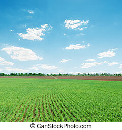 light clouds over green agriculture field