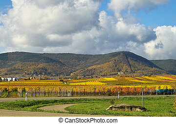 Light, colours and grapes - colourfull rows of wine grapes, ...