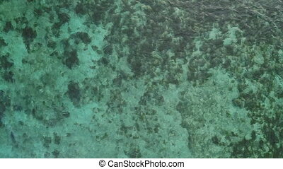 Light green bottom of the ocean. Philippines. Aerial view.