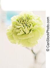 light green carnation