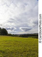 light green meadow in spring