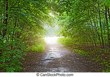 light in the forest after rain