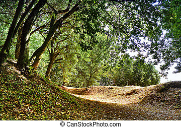Light in the forest at early autumn Forest of Castro Alobre in Vilagarcia de Arousa