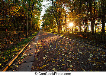 Light of the setting sun in autumn park on footpath