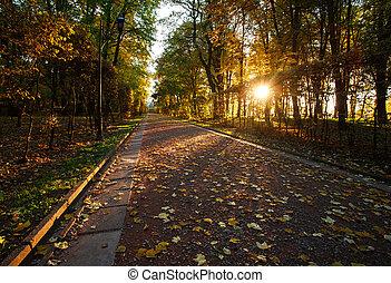 Light of the setting sun in autumn park on footpath